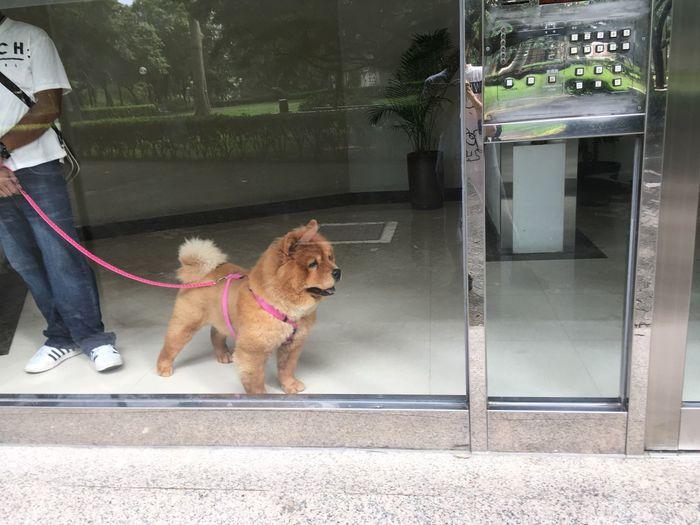 Dog walking on street