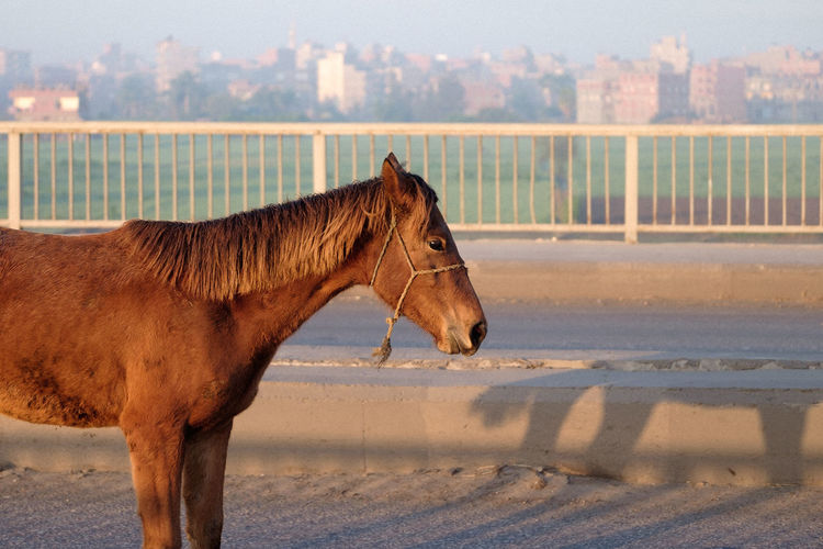 Horse Sunrise Animal Sky Horse Pony Working Animal