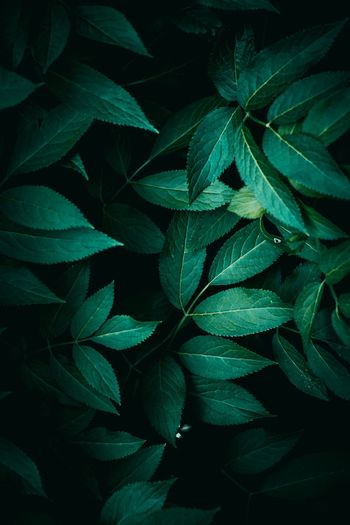 Green plant leaves texture in springtime