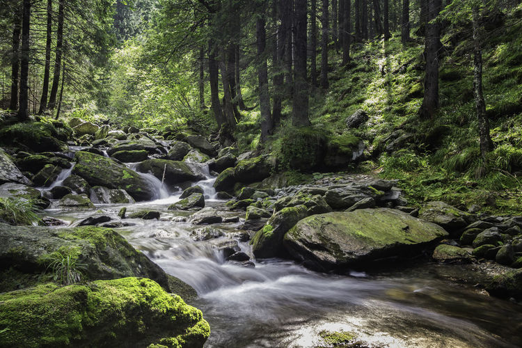 Natural Beauty Nature Photography Romania Beauty In Nature Day Flowing Flowing Water Forest Land Long Exposure Motion Nature No People Outdoors Plant Power In Nature Rock Rock - Object Scenics - Nature Solid Stream - Flowing Water Tranquility Tree Water WoodLand