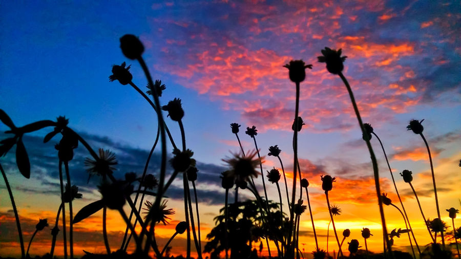 Life is Beautiful Mobilephotography Lowangle Nature Takenwithxperia Mystressreliever Flower Head Tree Flower Palm Tree Sunset Natural Parkland Silhouette Plant Part Uncultivated Leaf
