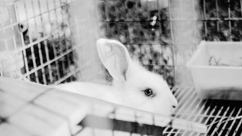 Domestic Animals Animal Themes Close-up Rabbit Rabbit Portrait Rabbit Eye Rabbit Face Cuteanimals Animal Photography Animal_collection Animal Eye Animal Lover Animal Portrait Cute Animals Cutepets Cute Rabbit