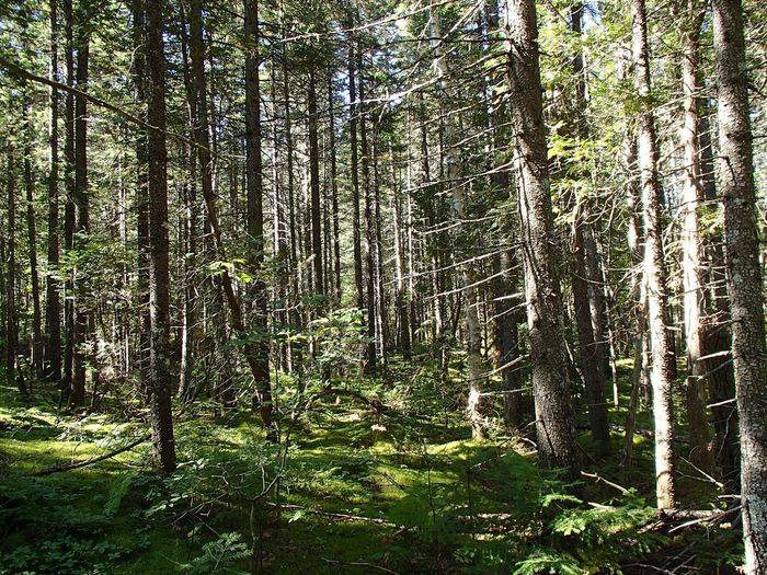 Forêt mixte laurentienne - Laurentian Mixed Forest (Parc national de la Mauricie) Plant Tree Forest No People Growth Beauty In Nature Land Nature Outdoors Green Color Lush Foliage