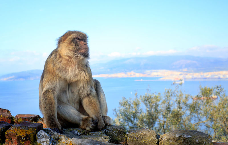 Outdoors Gibraltar Nature No People Selective Focus Rock Of Gibraltar Barbery-ape Macaque EyeEm Nature Lover Animal Photography Landscape