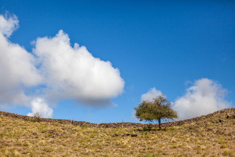 Cloud - Sky Sky Scenics - Nature Tranquil Scene Beauty In Nature Tranquility Blue Environment Landscape Land Non-urban Scene Day Nature Plant No People Tree Field Outdoors Mountain Low Angle View
