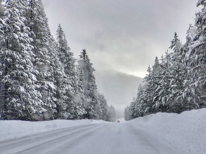 Snow-covered road with trees on both sides Snow Cold Temperature Winter Nature Weather Tree Beauty In Nature Landscape Road Day No People Outdoors The Way Forward Tranquility Scenics Tranquil Scene Snowing Sky
