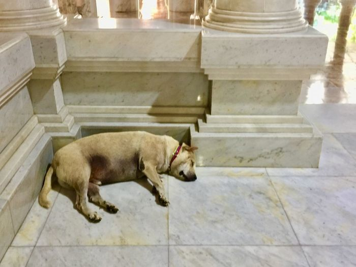 Fat dog guards the temple Thai Street Dog Mammal Animal Themes One Animal Pets Domestic Animals Domestic Animal Day No People Built Structure Architecture Building Exterior Dog Canine High Angle View Staircase Vertebrate Relaxation Flooring Full Length