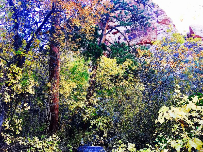 In Living Colour Hike Therapy Color Therapy Digging For Depth