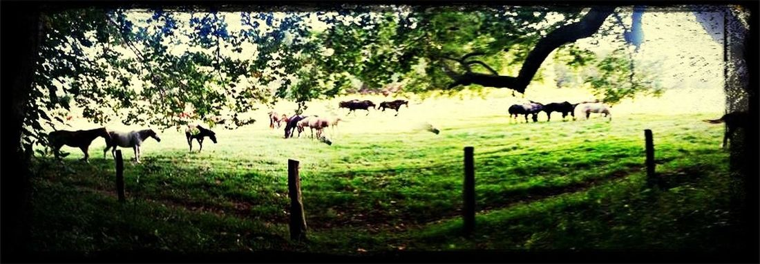 Horses Cades Cove Outdoors Animals Wild Life