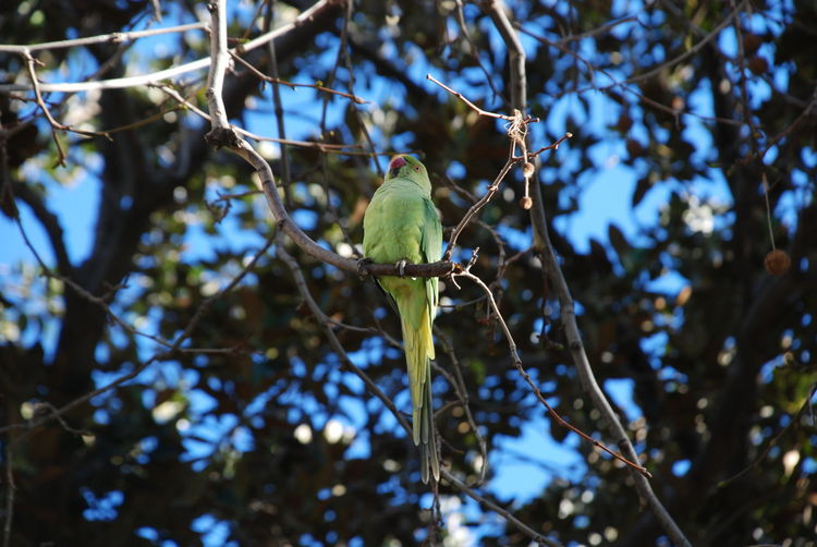 Green Branches Sky Clear Sky Pattern Animal Nature Blue Sicily Close-up Lights Shadows Springtime Bird Perching Tree Branch Animal Themes Parrot Songbird