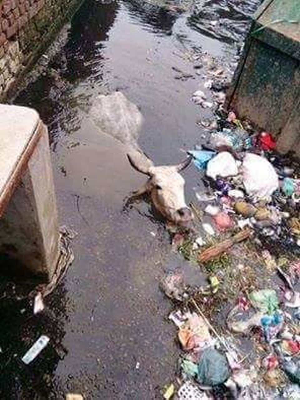 garbage, water pollution, pollution, water, day, high angle view, unhygienic, no people, outdoors, sewage, puddle, oil spill