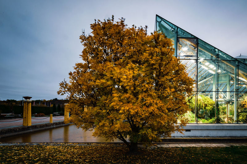 Tree Plant Nature Change No People Day Outdoors Beauty In Nature Bergianska Trädgården Botanical Garden Autumn Fall Autumn Leaves Architecture Built Structure Sky Growth Bridge Building Exterior Water Bridge - Man Made Structure Yellow Connection Greenhouse Inside And Outside