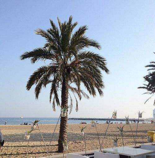At CDLC Barcelona