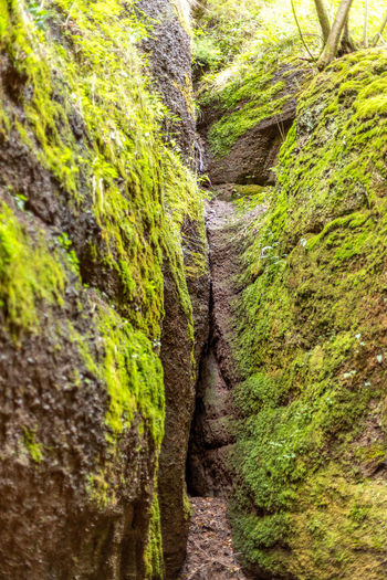 Moss growing on rock amidst trees in forest
