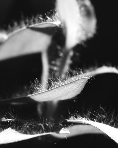 - everything becomes so clear in black and white - Close-up Motion Selective Focus Blurred Outdoors Day Surface Level Focus On Foreground Summer Bright Soft Focus Monochrome Tranquility Nature Monochrome Photography Plant Detail Detailled No People Monochrome Nature Maximum Closeness