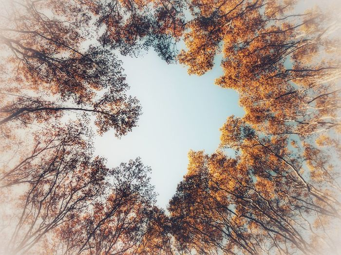 Low Angle View Nature Tree Sky Beauty In Nature No People Outdoors Backgrounds Day Multi Colored Autumn Leaves Autumn🍁🍁🍁 Autumn Somosfelices Taking Photos Capture Moment Enjoying Life Autumn Colors