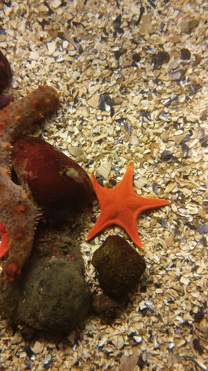 Beach Sand Starfish  Shore Nature Sea Life Day No People Outdoors Sunlight Sea Animals In The Wild Animal Themes Water Vacations Beauty In Nature Close-up UnderSea Tentacle Beauty In Nature Beauty Shotononeplus Shotononeplus3t Vancouver Aquarium Pet Portraits