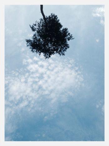 Tree Sky Nature Simplicity