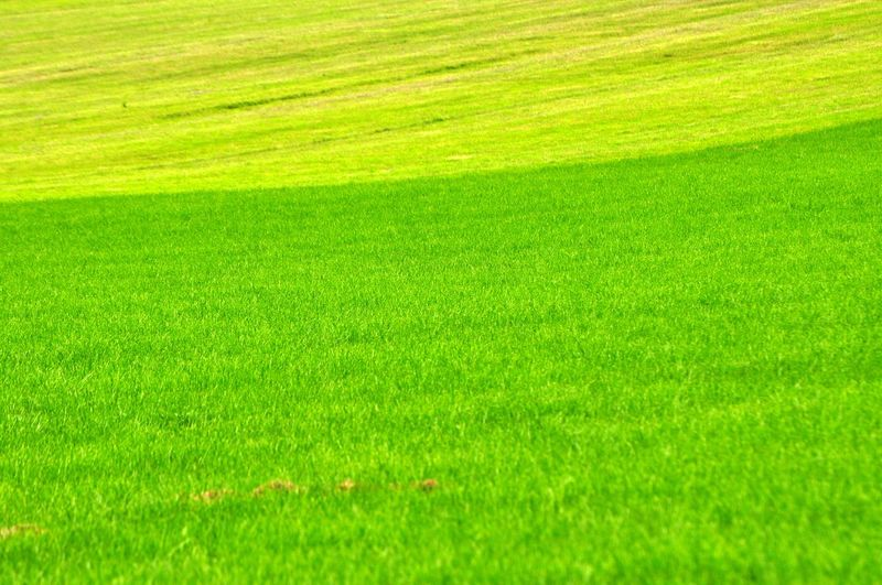 Grass Green Color Plant Backgrounds Springtime Lawn Nature Environment Sport Summer Full Frame Playing Field Beauty In Nature Land Golf Course Front Or Back Yard Field Golf Landscape Freshness Vibrant Color Outdoors No People Green - Golf Course Turf