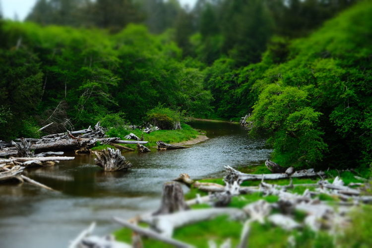 The Great Outdoors - 2017 EyeEm Awards River Deadwood  Kalaloch Creek Forest Photography Pacific Northwest  Washington Washington Coast Kalaloch Olympic National Park Cloudy Mist