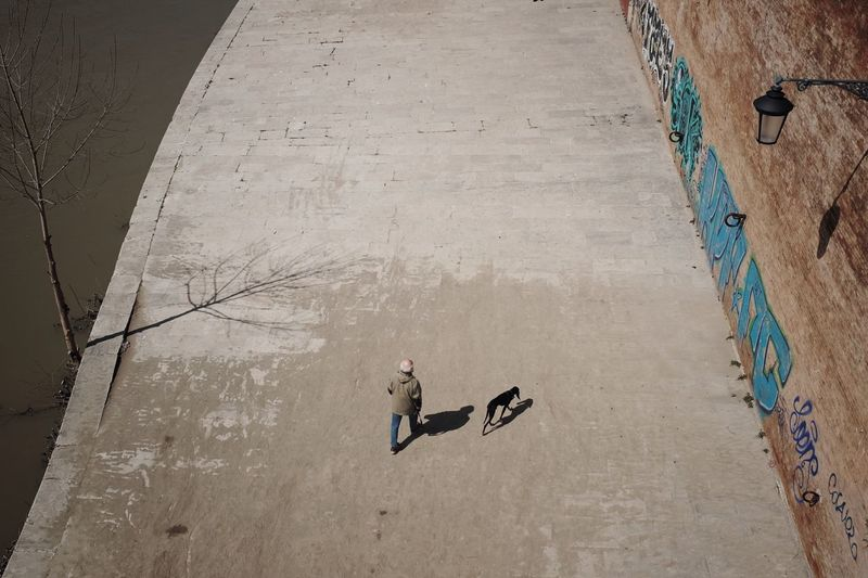 High angle view of man and dog walking on road during sunny day