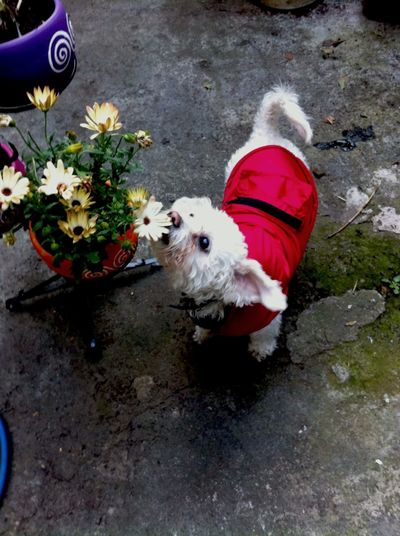 El ama las flores 🐶🌼 Check This Out Lovedogs Frenchpoodle