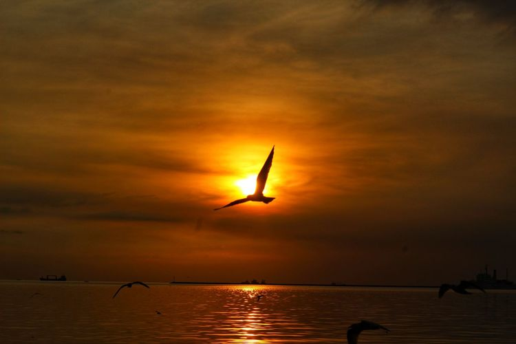 Sunset Bird Silhouette Water Flying Animal Wildlife Nature Reflection Animals In The Wild Outdoors Sea Beauty In Nature Scenics Sky Flamingo Landscape No People Animal Themes Spread Wings Day
