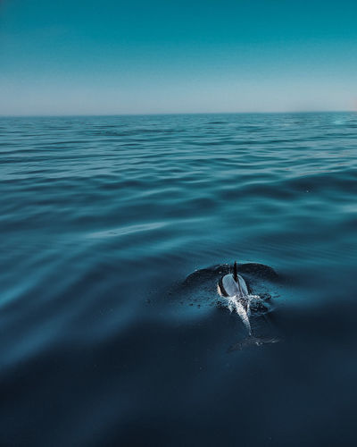 View of dolphin swimming in sea