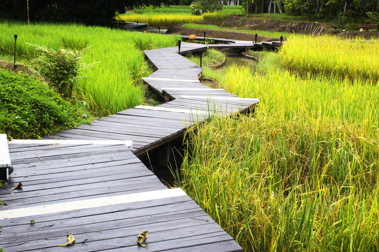 Across Agriculture Boardwalk Bridge Country Direction Elevated Farm Farming Farmland Field Forest Grain Greenery Journey Lamp Landscape LINE Nature Passage Path Plantation Rice Route Rural Scene Scenery Through Timber Trees Tropical Vegetation Village Walkway Water Way Wood Wooden