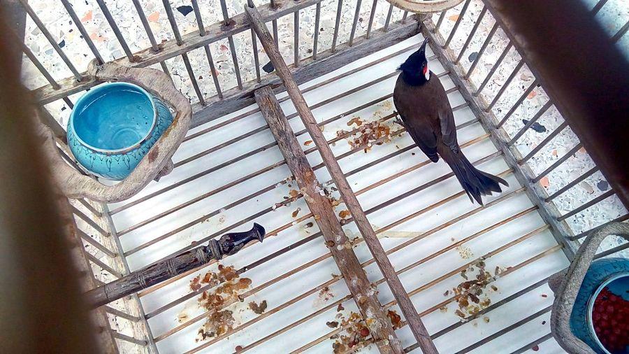 Photography 2017 Creative Photography Bird Bird Cage Bird In Thailand Bird In Tha Cage Protected Bird Protected Animals Protected Bird In Thailand Bulbul Bird Bulbul