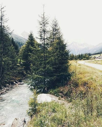 Wish to be there. Alto Adige Tree Nature Beauty In Nature Altoadige Lifestyle Photography Autumn Stories Nature Postcard Südtirol Wheretogo Photographylovers Mountainslovers Landscape Places Mountains Starsandchocolate