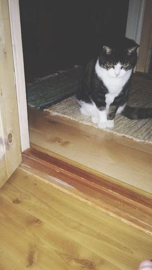 Evilcat Cat Killerblick  Evileye Evil