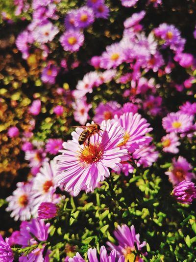 bee in october