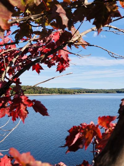 Red flowering plant by lake against sky