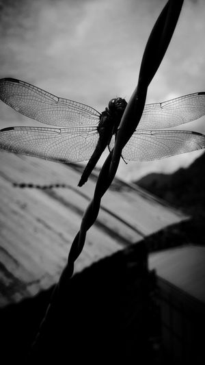 ITs..onLY ...A...DreaM..... Dragonfly_of_the_day Life's Simple Pleasures... Nature On Your Doorstep Nature's Diversities Unknown Journey My Collection... Photography Is My Escape From Reality! Black And White Collection  Black And White Photography Just Another Day Alone Alonetime Loneliness Monochrome Photography Art Is Everywhere