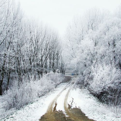 Cold Whitness Bank Serbia Snow ❄ Hoarfrost