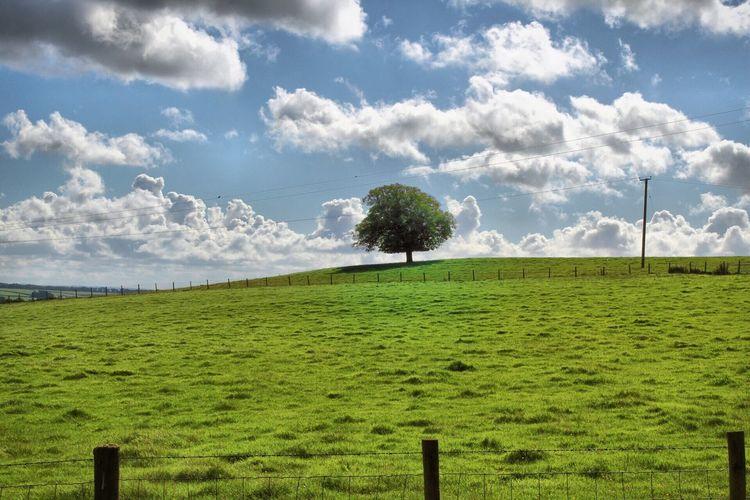 the lone tree 🌳 Grass Sky Field Green Color Landscape