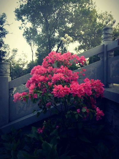 Flower Blossom Red Growth Outdoors Nature