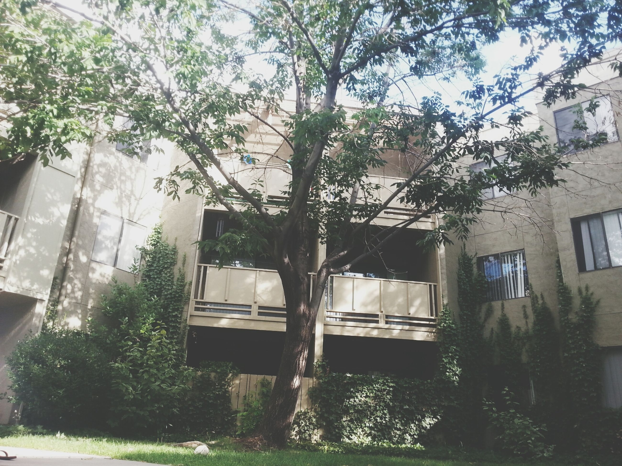 built structure, tree, architecture, building exterior, house, chair, window, plant, growth, residential structure, day, table, abandoned, no people, sunlight, front or back yard, water, residential building, absence, branch
