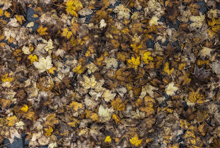 Full Frame Autumn Backgrounds Yellow Leaf Day Nature Plant Part No People Beauty In Nature Close-up Change Abundance High Angle View Leaves Outdoors Natural Condition Fall Rotten Rotten Leaves New Soil Becoming Soil Ground Ground Level Yellow Leaves