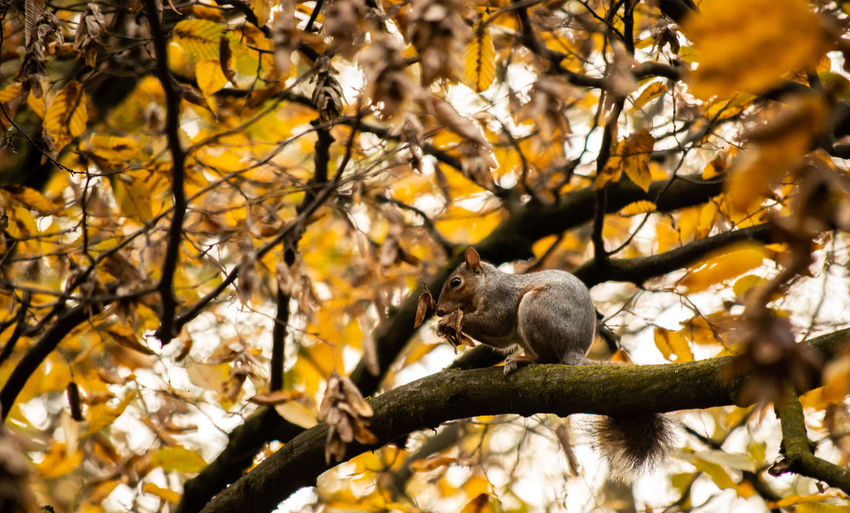 Low angle view of squirrel sitting on tree