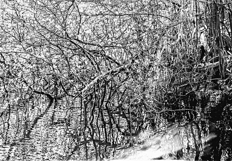 Full frame shot of bare trees during winter