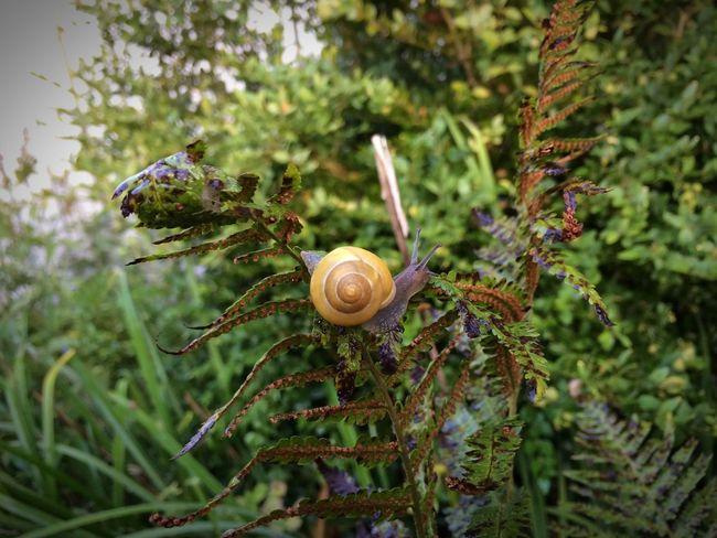 A little friend Danmark Godthåb Snail Tadaa Community One Animal Fragility Animal Themes