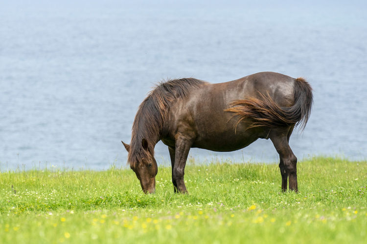 Wild horses shot on a green meadow by the sea shore. Horse Horses Animals In The Wild Wild Animals Wild Horses Outdoors Spring Green Nature