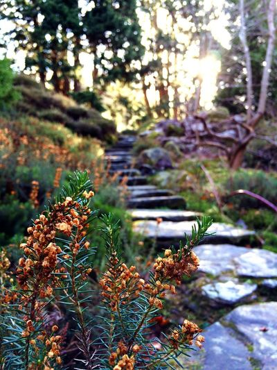 Cragside National Trust