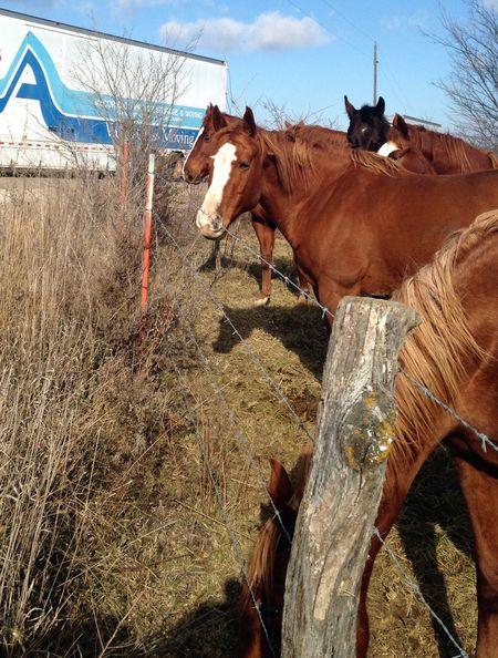 Working Backroads Horses Truck