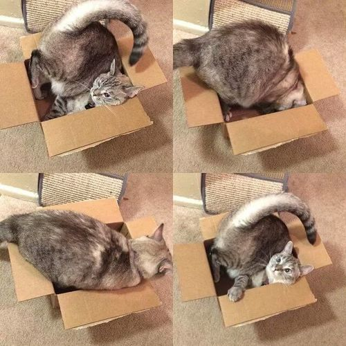 Cat Cat In The Box Adorable