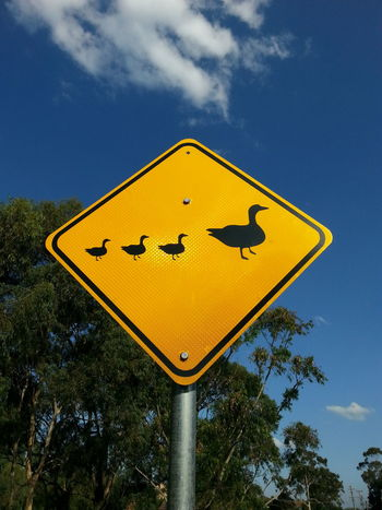 three little ducks went out one day Blue Sky Bright Sunshine Communication Day Drive Carefully Duck Ducklings Ducks Mother Duck PhonePhotography Road Sign Semiotics Sign Signs Signstalkers Silhouette Sky Smartphonephotography Street Sign Street Signage Street Signs The Purist (no Edit, No Filter) Tree Yellow Ducks Crossing