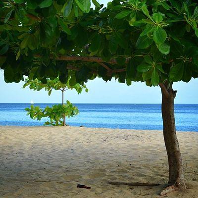 Livefunner Ig_caribbean Ilivewhereyouvacation Ig_caribbean_sea Islandlivity Ig_clubaward Theblueislands Thebeach Teamnikon Westindies_pictures Westindies_colors Worldclassscapes Worldclassscapes Wu_caribbean Color_n_nature Nature_shooters Nature Grenada