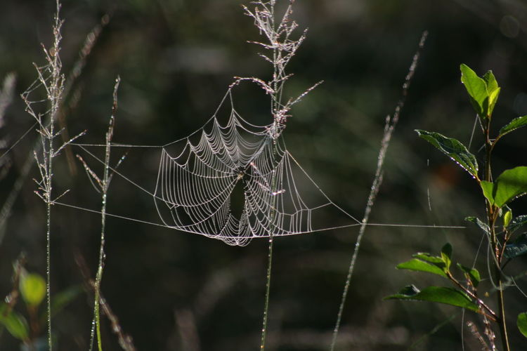 Wet web. Huse